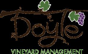 DVM-Logo-Web
