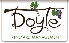 Doyle Vineyard Management